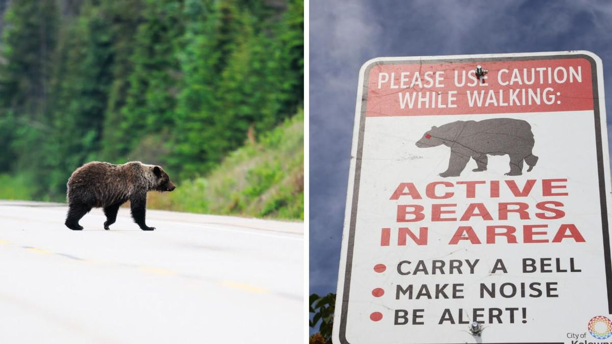2 Bears Were Spotted In A Calgary Neighbourhood & People Are Asked To Be On The Lookout