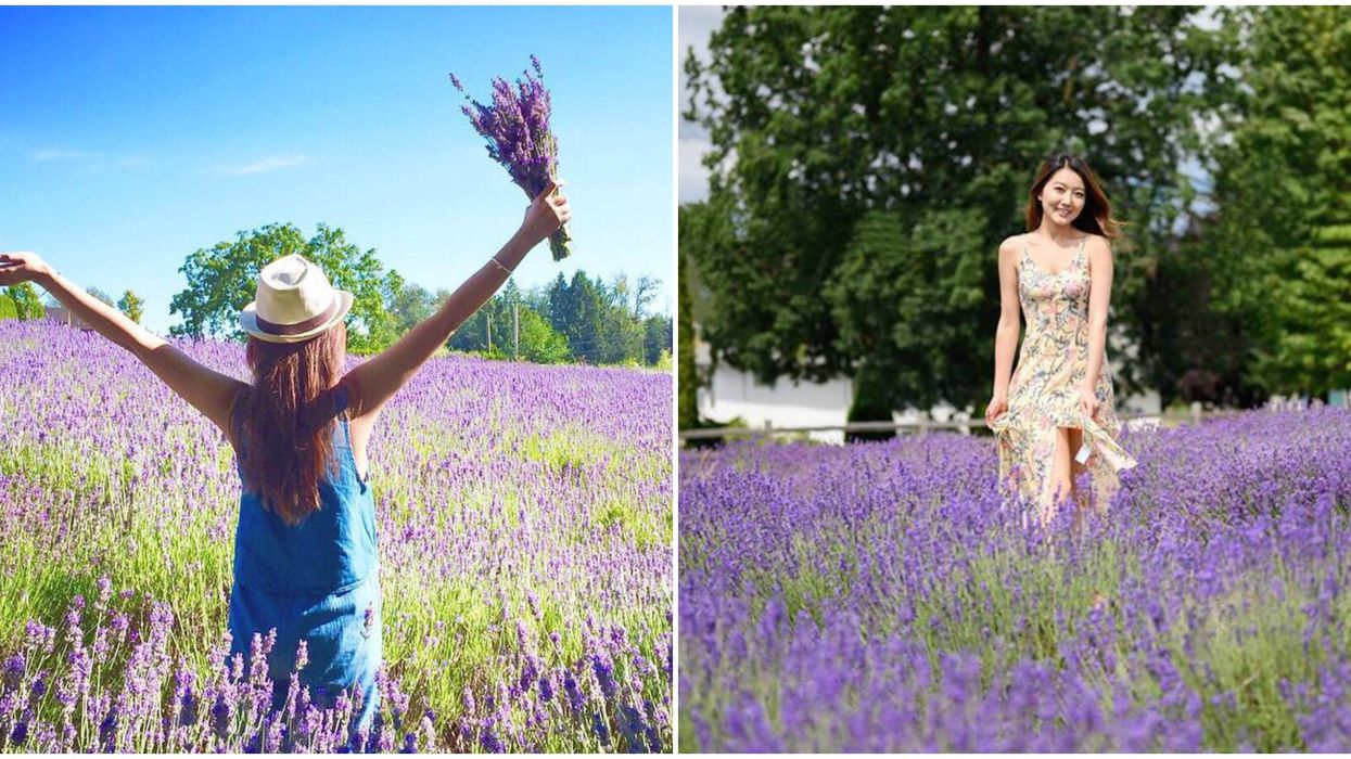 4 BC Lavender Farms To Visit This Summer If You Are Obsessed With All Things Purple