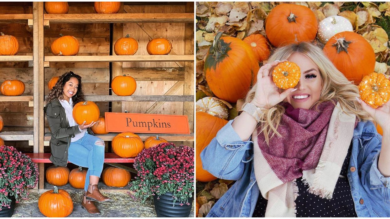 7 Pumpkin Patches In Alberta That Are So Worth The Drive This Fall