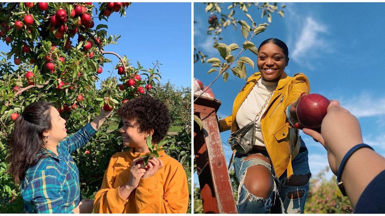 7 vergers magnifiques où cueillir des pommes sur la Rive-Sud de Montréal