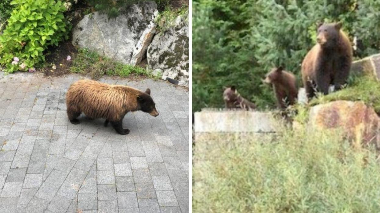 A BC Woman Has Been Fined $60K For Feeding Black Bears On Her Property