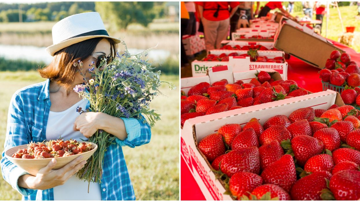 A Strawberry Festival In Austin Is This April