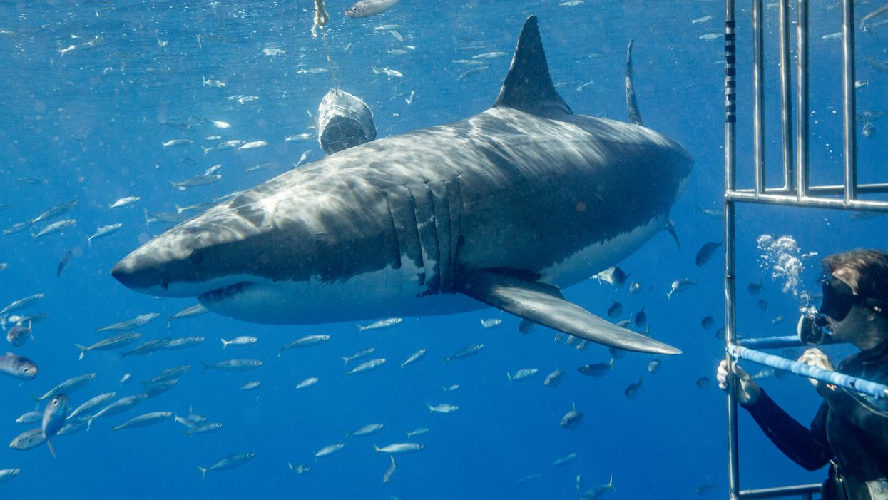 Atlanta Georgia Aquarium Shark Cage Dive Experience Is Coming Next Year
