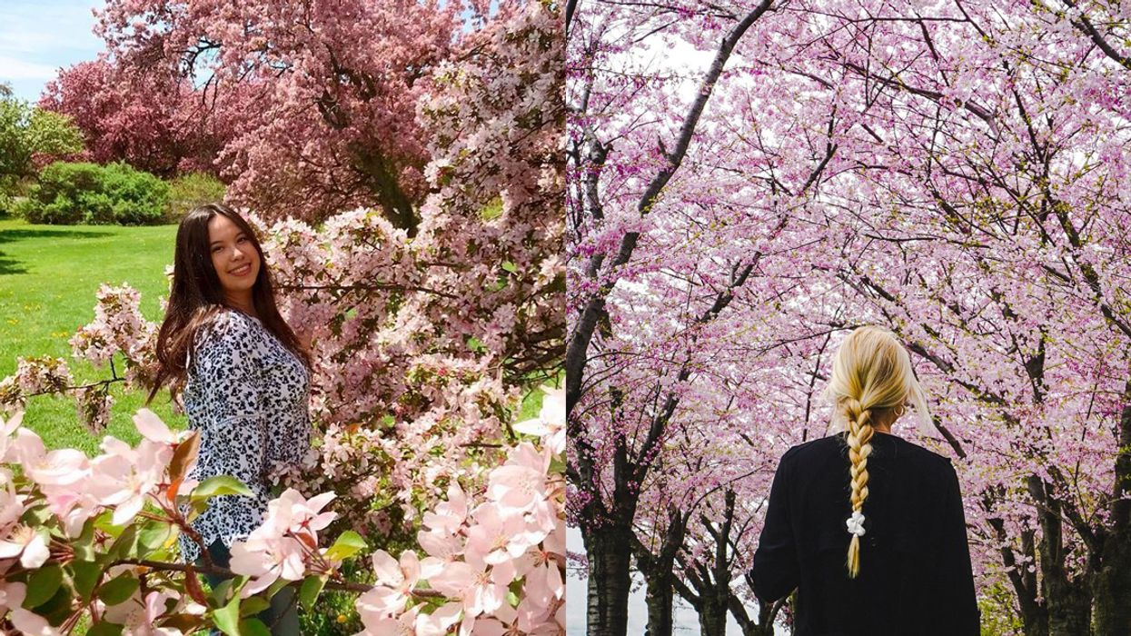 Cherry Blossoms In Ontario A Map To The Most Magical Spots