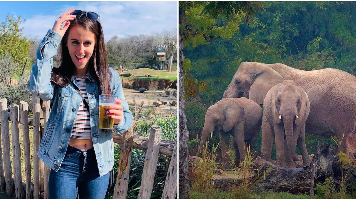 Dallas Zoo Is Having A Safari Night This March With Free Beer And Animal-Themed Trivia