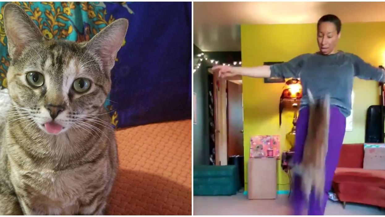 'Dancing Cat' Hilariously Interrupts This Seattle Ballet Teacher During Her Video Tutorial