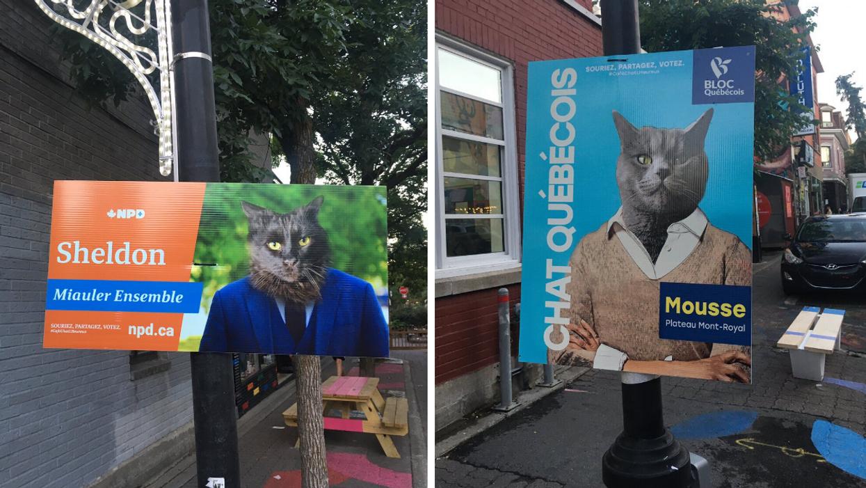Des affiches électorales pour chats apparaissent à Montréal