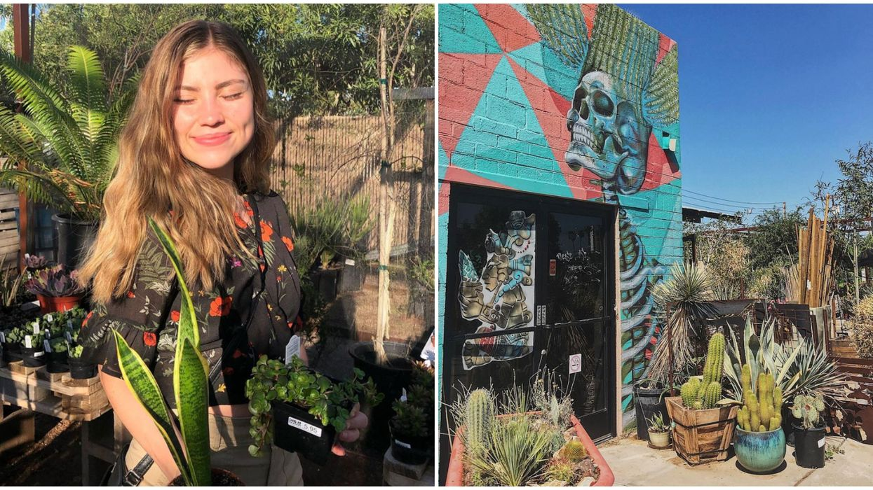 Dig It Gardens In Phoenix Offer Private Appointments In Their Shop
