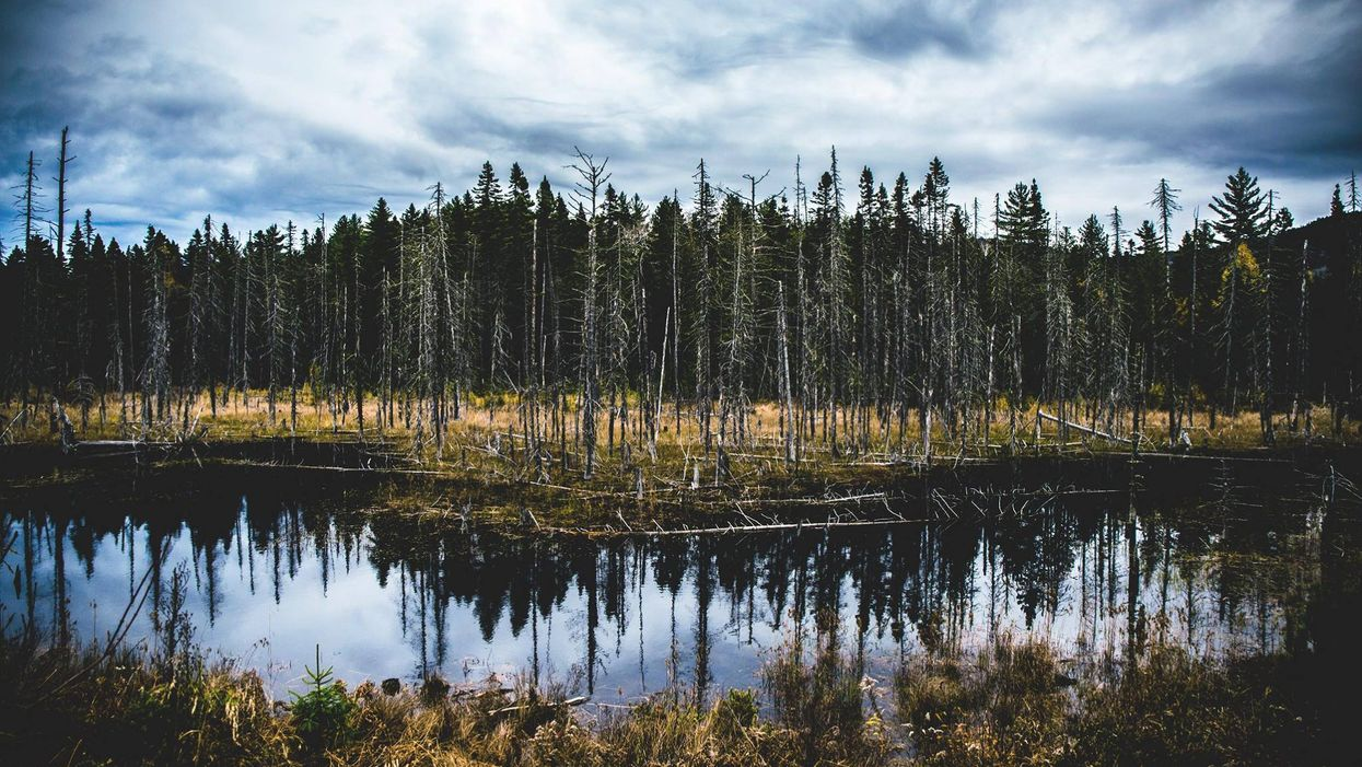 5 endroits parfaits pour faire de la randonnée aux alentours de Montréal