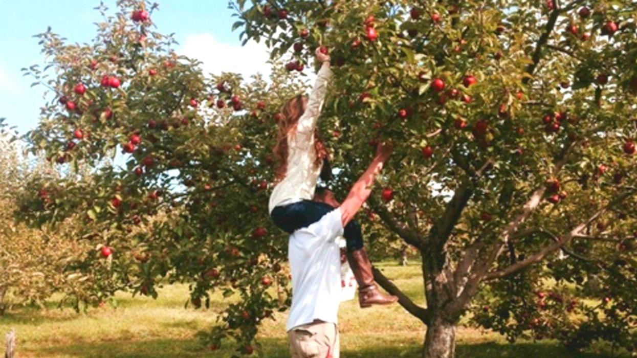11 vergers près de Montréal où supplier ton chum de t'amener cueillir des pommes cet automne
