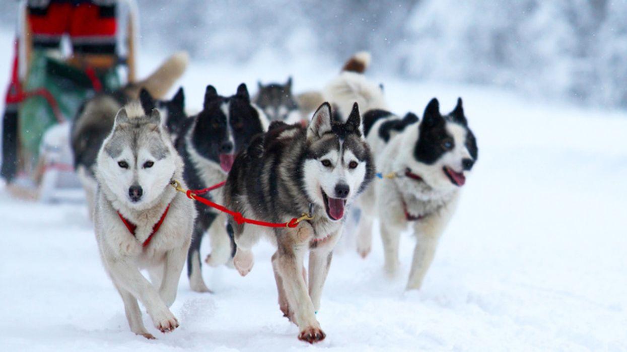 8 activités à faire entre amis ou en couple près de Montréal cet hiver