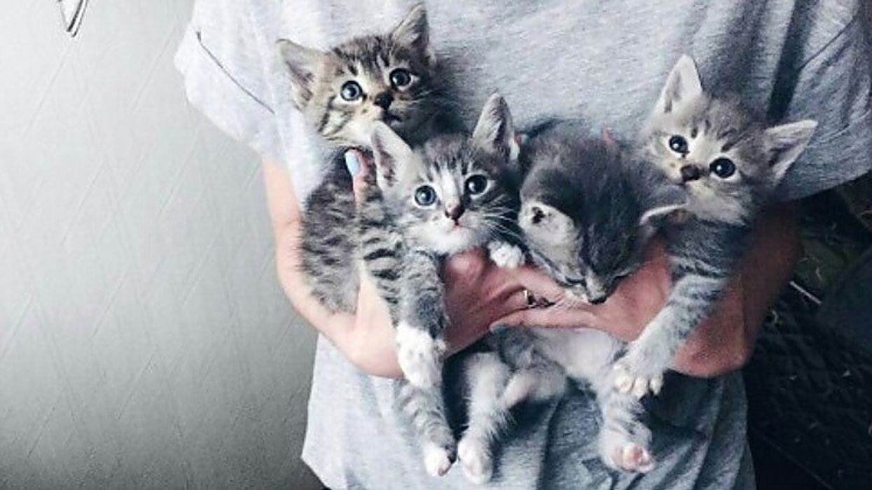 Un gros party de chats aura lieu ce soir à Montréal!