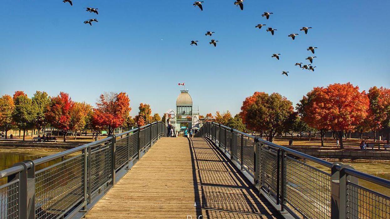 Les 11 meilleurs spots où voir les plus belles couleurs d'automne à Montréal