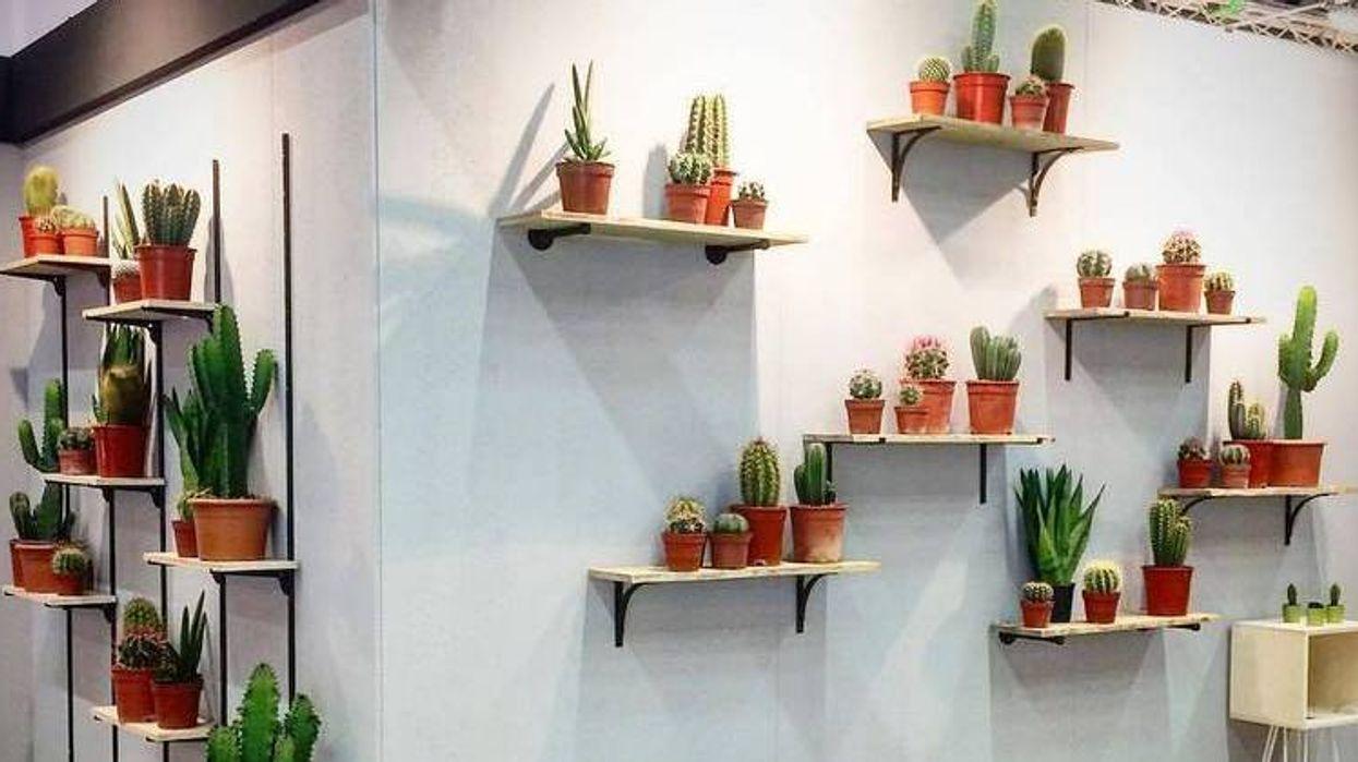 Une énorme vente de cactus à moins de 5$ aura lieu à Montréal prochainement!