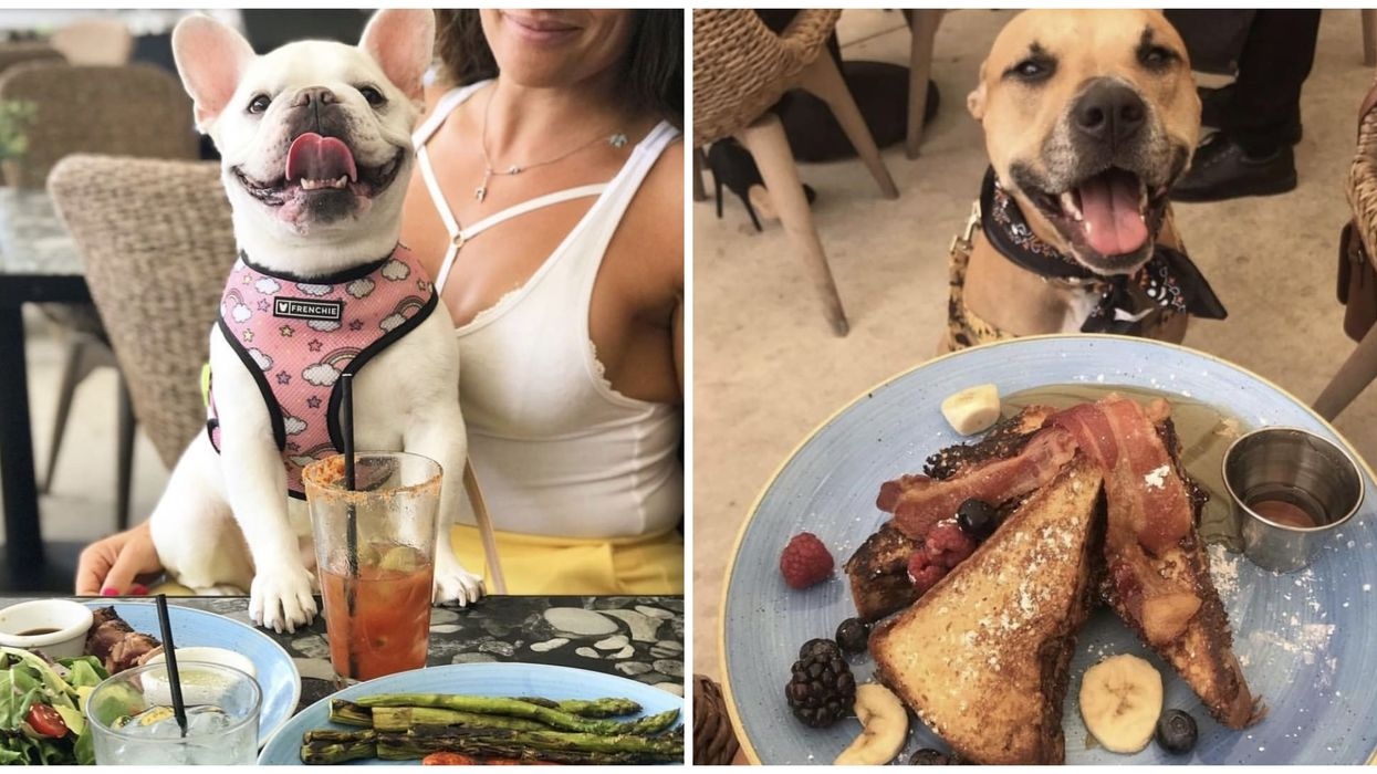 This Miami Restaurant Is Hosting A Brunch For Dogs With Puppy Cocktails