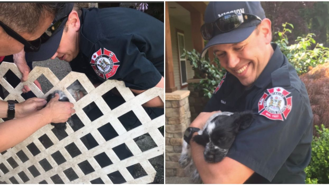BC Firefighters Rescued An Adorable Puppy Stuck In A Fence (PHOTOS)