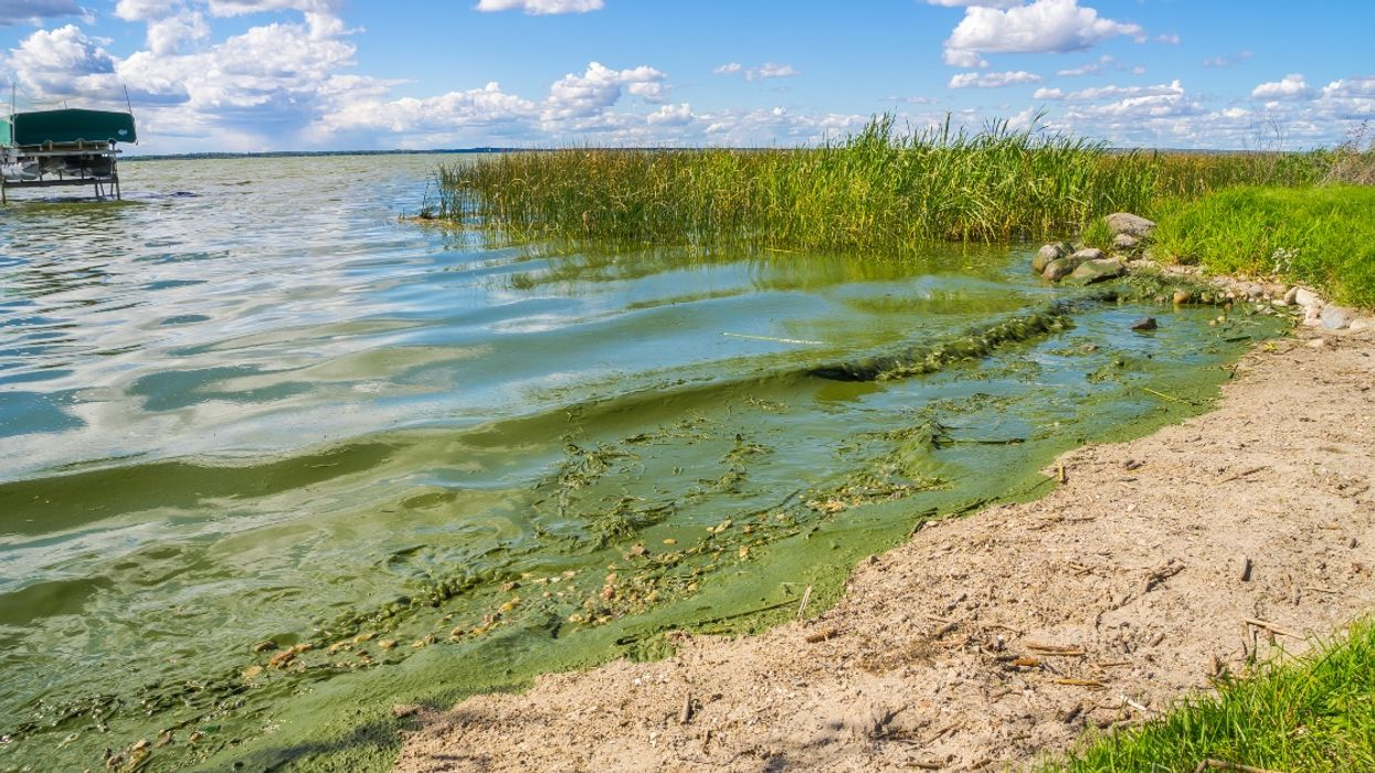 This Blue-Green Bacteria Found In BC Lakes Can Cause Swollen Lips, Vomiting, Fevers, & Other Scary Symptoms