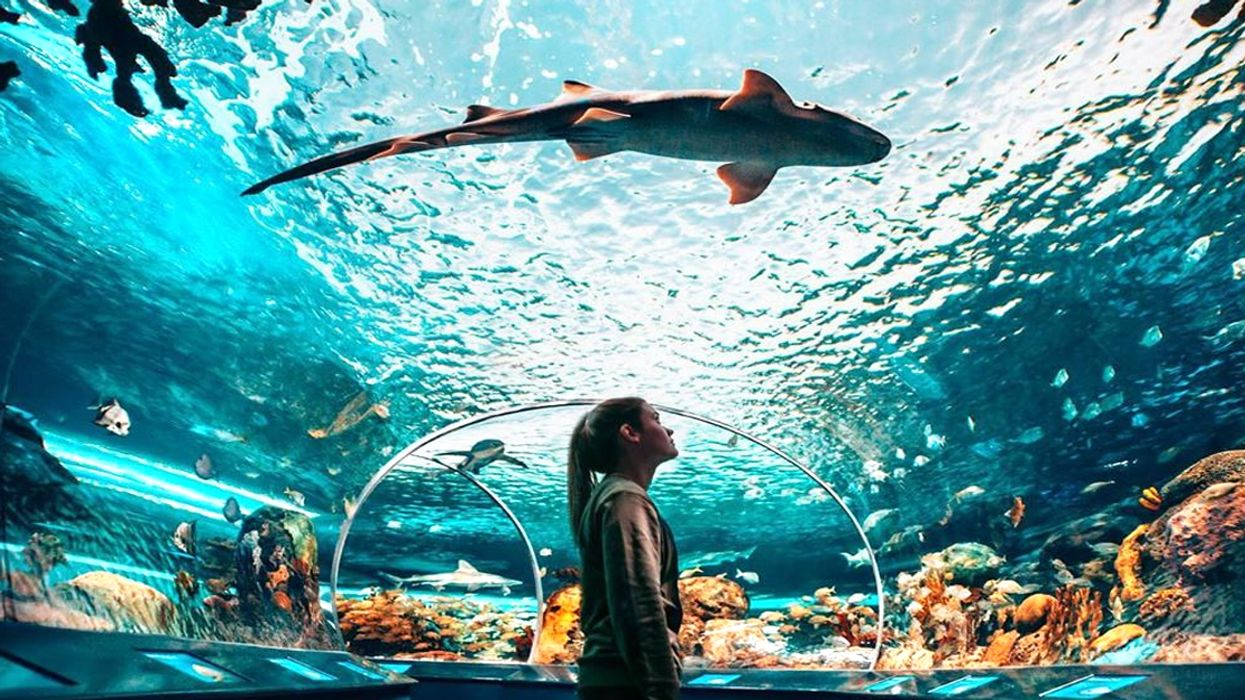 You Can Paint While Drinking Cocktails 'Underwater' At Ripley's Aquarium In Toronto This Fall