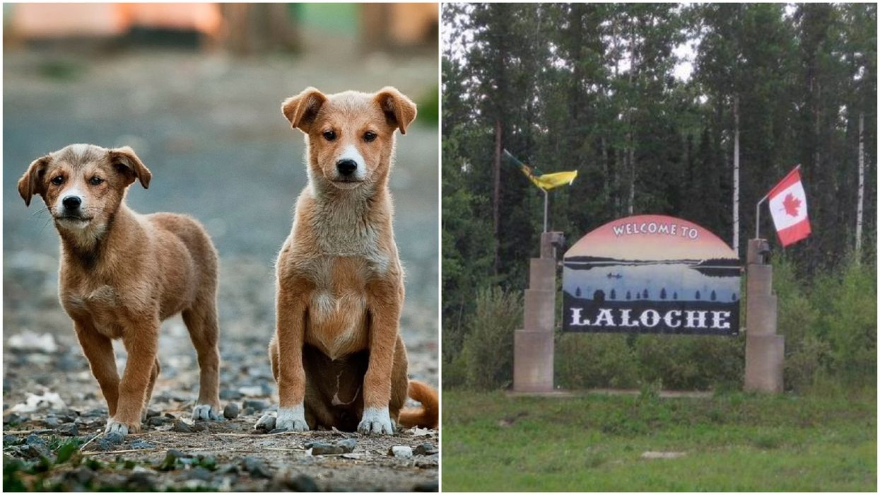"""This Canadian Village Just Cancelled Their Controversial Plan To """"Destroy"""" Stray Dogs"""