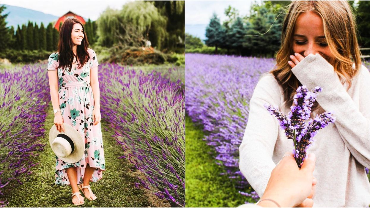 3 Gorgeous Lavender Farms Near Vancouver You Have To Experience Before Summer Ends