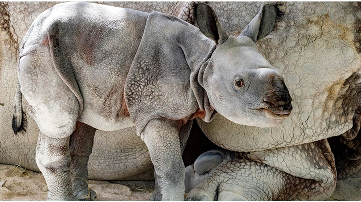The Internet Named A Rare Baby Rhino At The Miami Zoo And It's Pretty Adorable