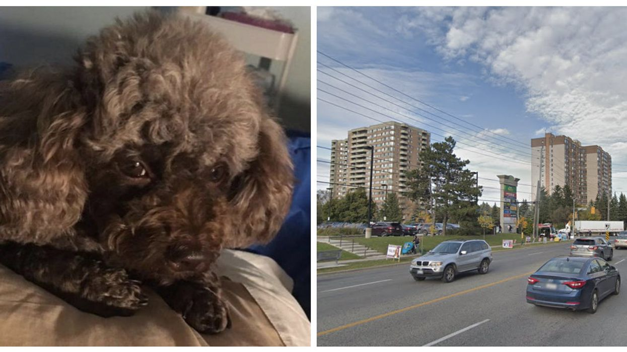 A Toronto Man Had His Pet Poodle Ripped From His Hands In A Robbery & He's So Devastated