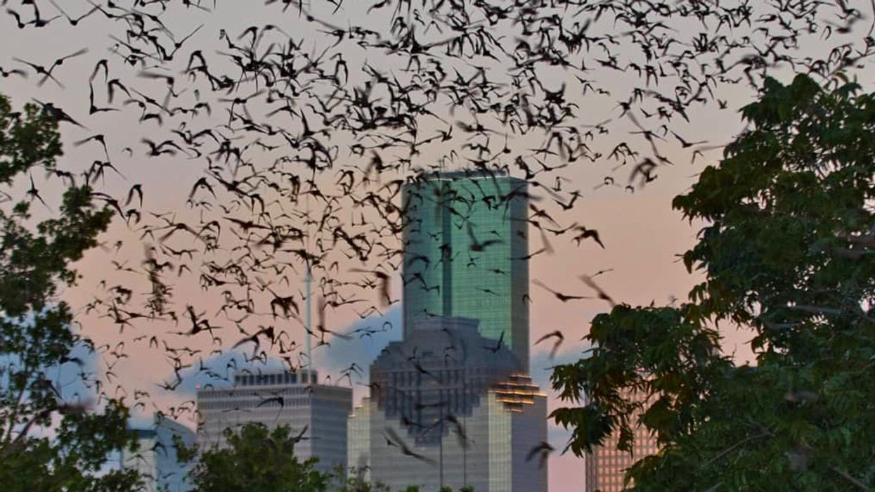 You Can Watch 200,000 Bats Emerge From This Scenic Houston Bridge Every Night