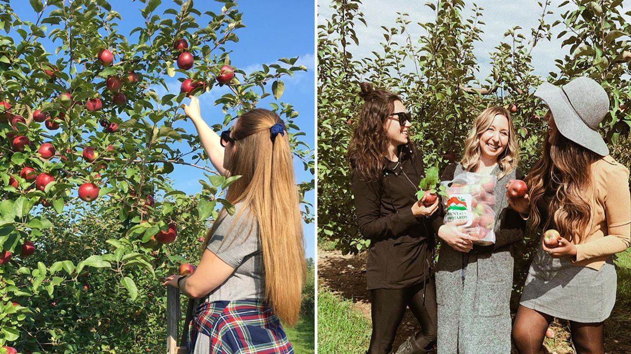 You Can Go Apple Picking With Your BFF At This Farm Near Ottawa In Fall