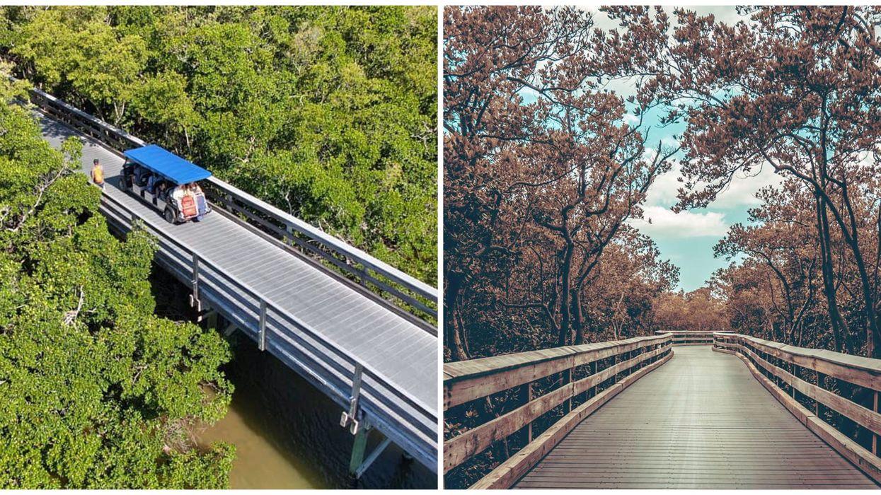 A Secret Beach Is Hidden Behind A Tunnel Of Mangroves In South Florida