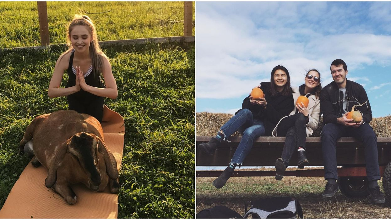 This Ottawa Farm Is The Perfect Fall Day Trip With Goat Yoga, Corn Mazes, And Alpaca Walks