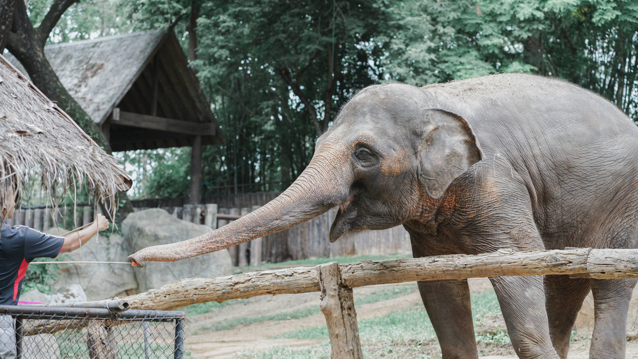 """Two Ontario Zoos Just Got Ranked Among The Most """"Cruel And Outdated"""" In The World"""