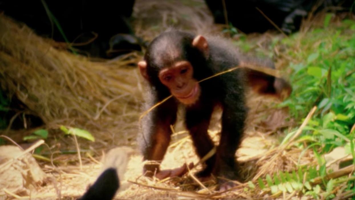 5 bons documentaires sur Netflix qui te feront aimer encore plus les animaux