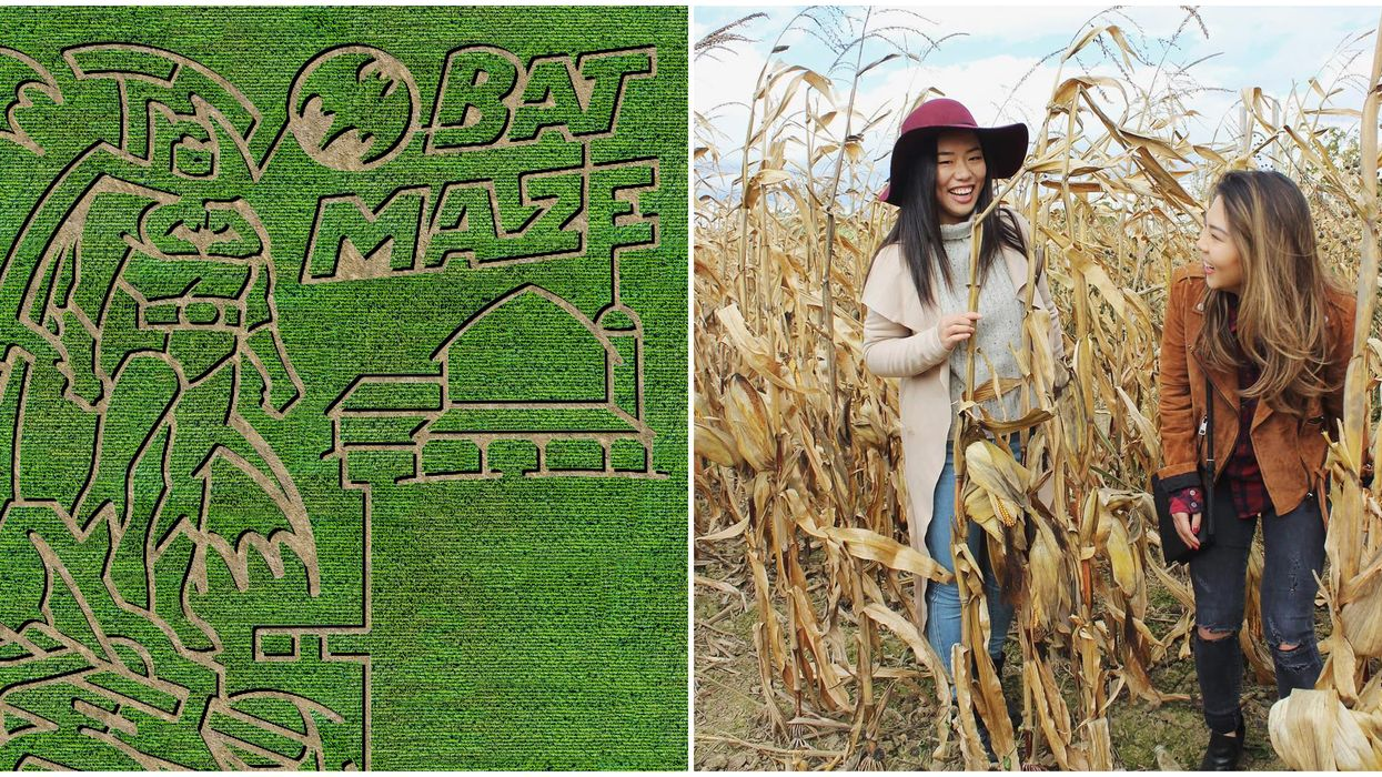 You Need To Explore This Insane Batman Corn Maze Near Toronto This Fall