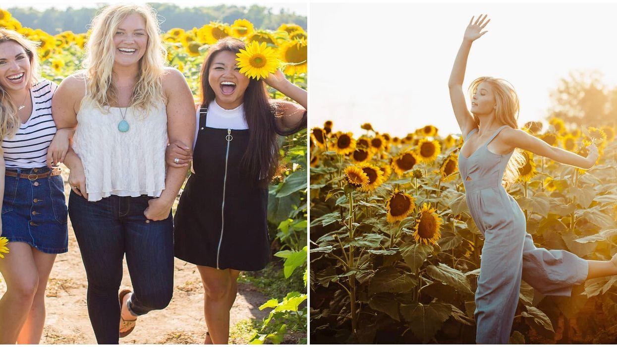 You Can Legit Take Sunflower Selfie Classes At This Ottawa Flower Festival (UPDATE)