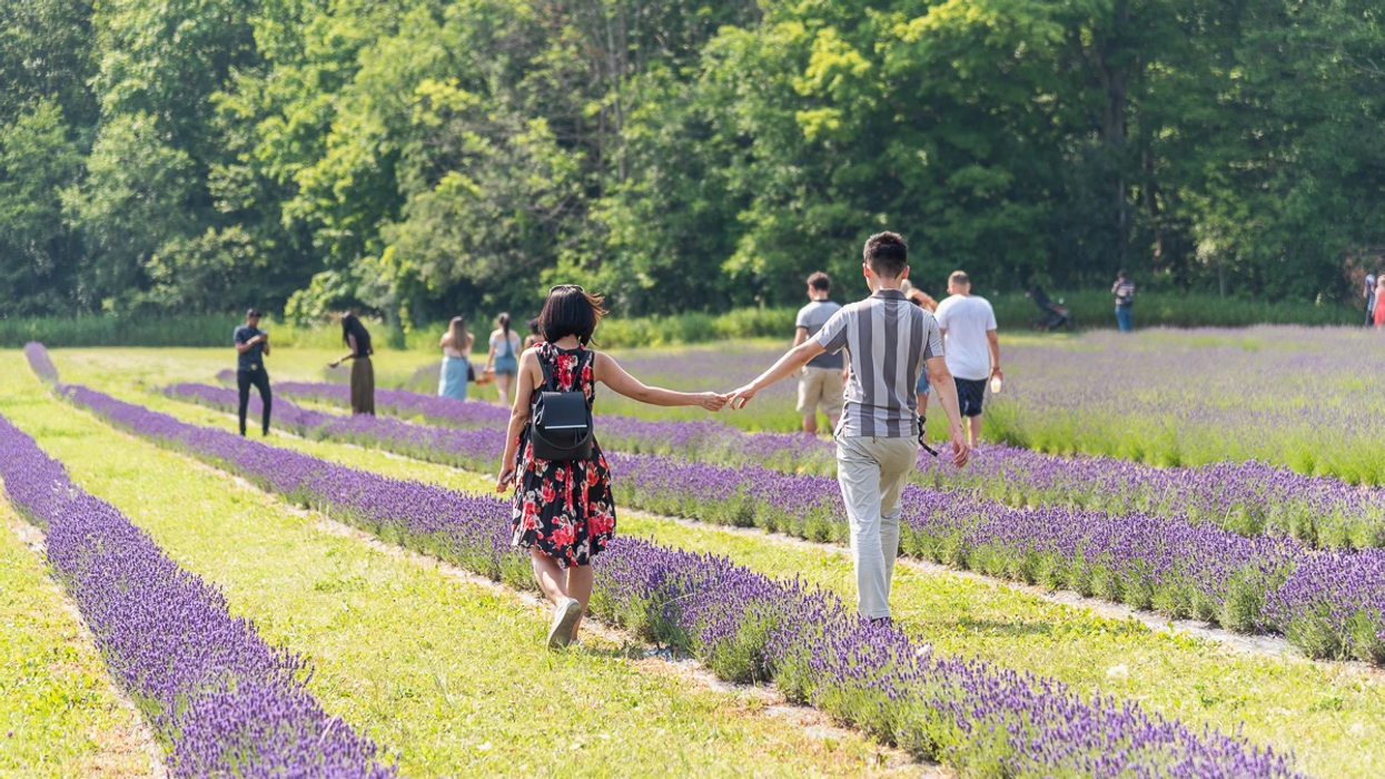 An Ontario Lavender Farm Is Begging Visitors To Stop Trampling Their Plants For Selfies
