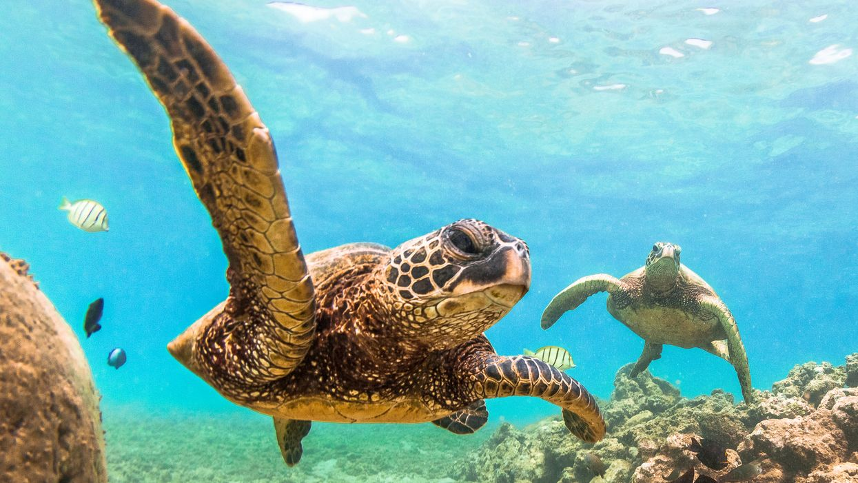 More Sea Turtles Are Visiting Florida Beaches Right Now For Nesting Season