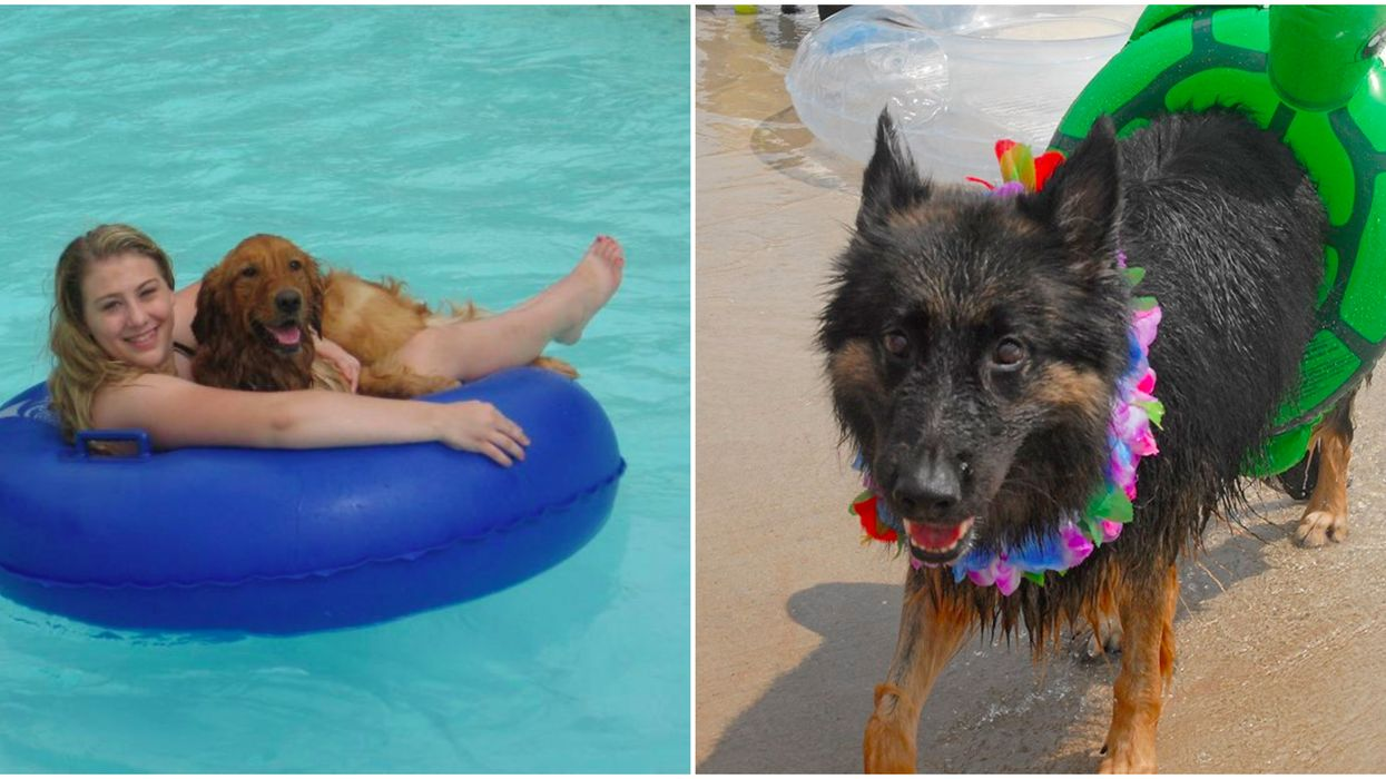 You And Your Dog Can Float Down A Lazy River At A Famous Dallas Waterpark This Fall