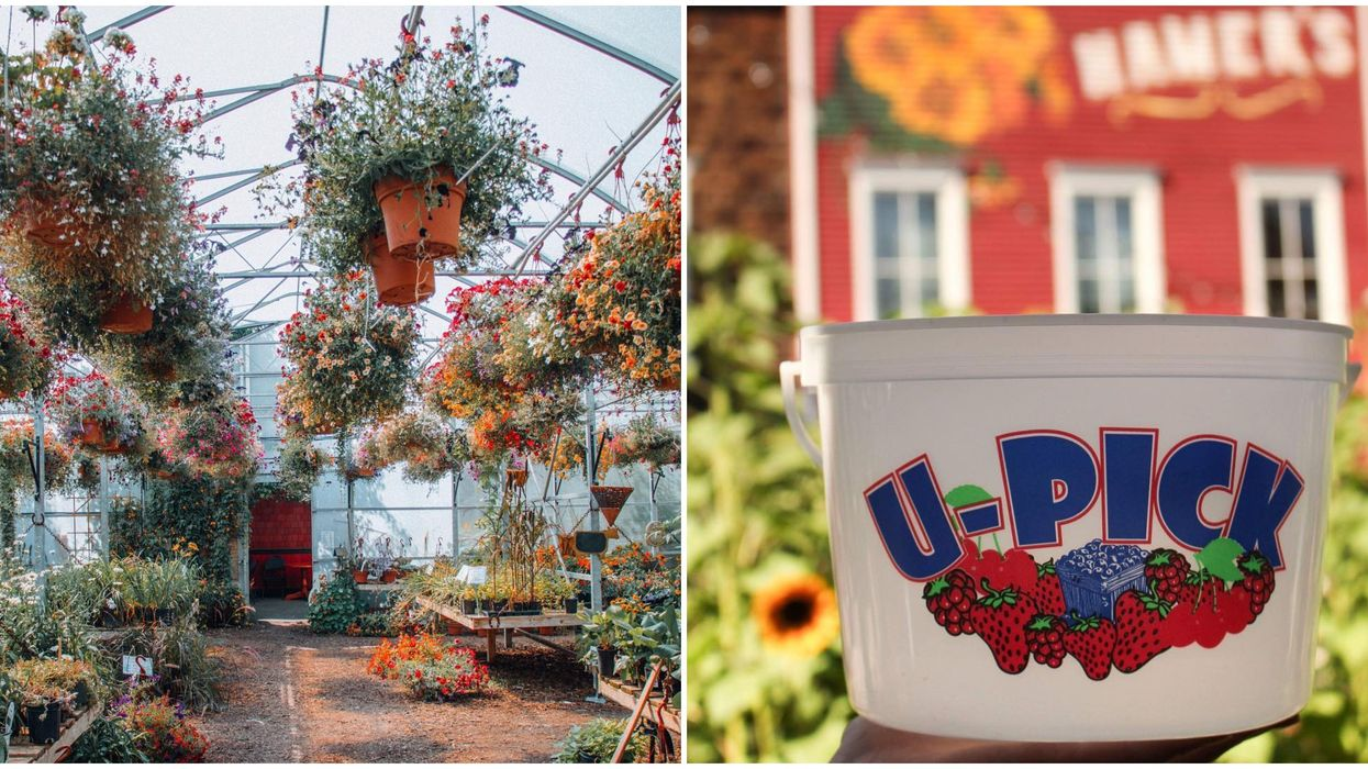 You Can Get One Last Taste Of Summer At Calgary's Adorable U-Pick Berry Farm