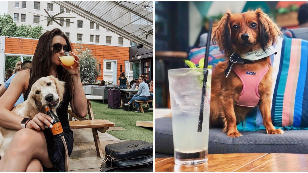 You Can Drink Cocktails With Your Dog At This Trendy Rooftop Bar In Austin