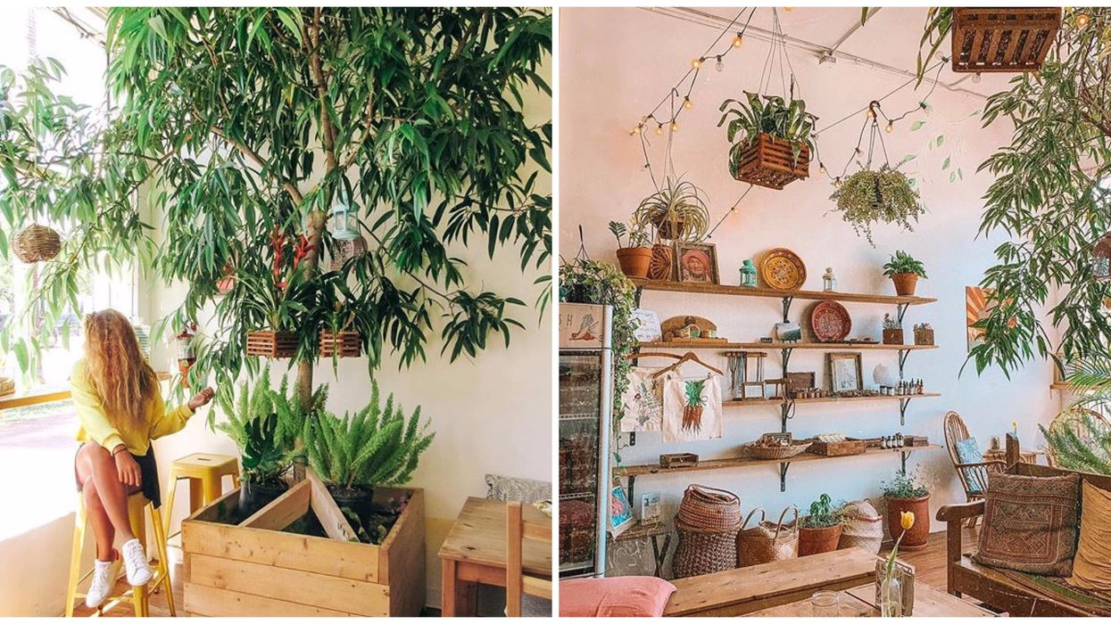 This Organic Miami Eatery With Indoor Trees Is Like A Mini Indoor Rainforest