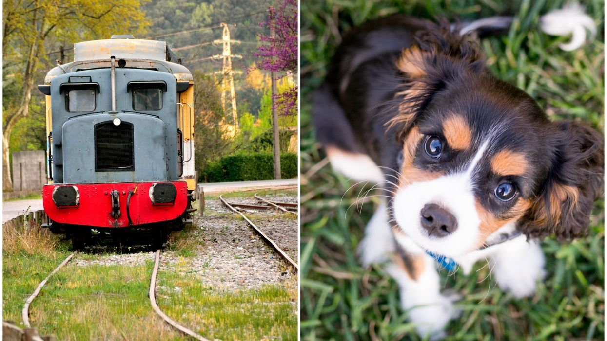 B.C. Man Hit By Moving Train After Trying To Rescue 2 Dogs That Ran Onto The Tracks