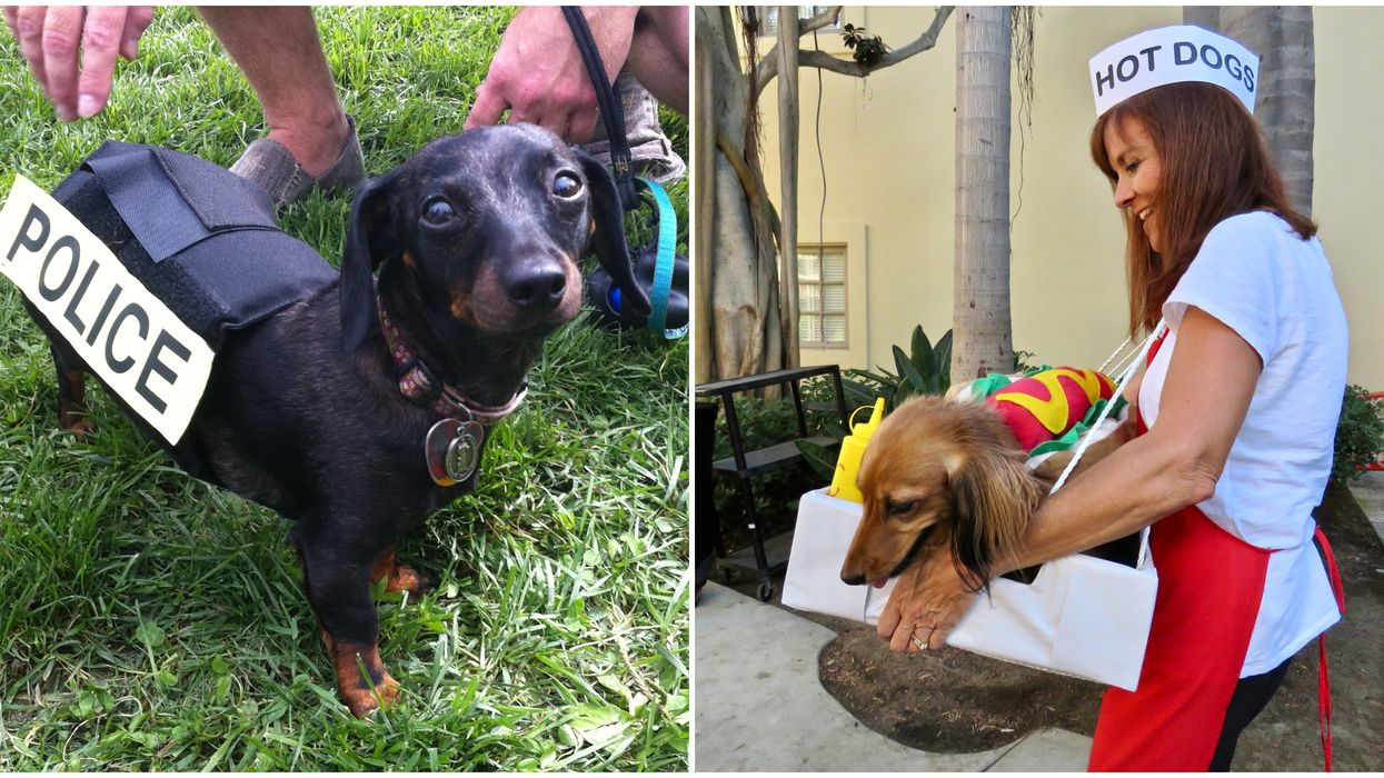 Ottawa Is Hosting A Wiener Dog Parade This Weekend And The Dogs Are Cute AF (PHOTOS)