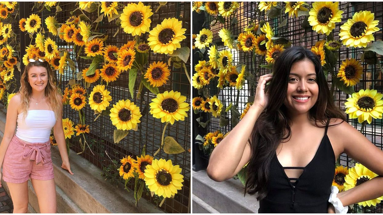 For The Perfect End-Of-Summer Picture, You Can Head To This Wall Of 400 Sunflowers In Toronto