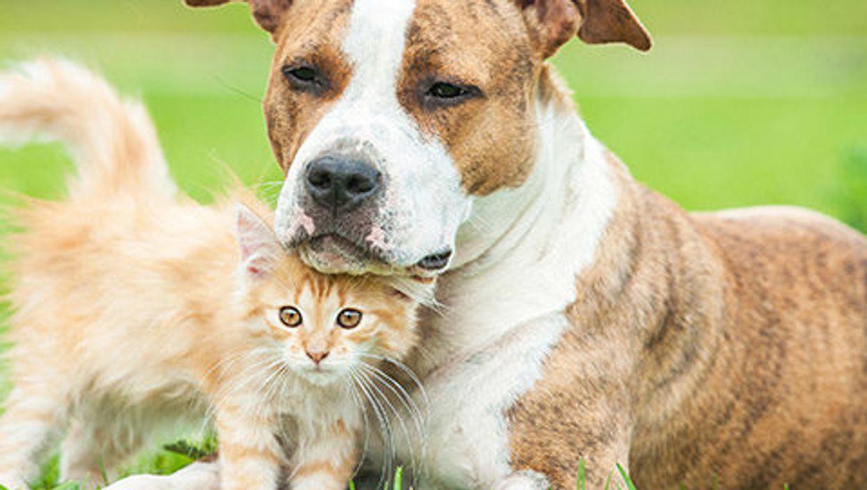La vente de chiens et de chats en animalerie sera officiellement interdite en 2020 à Montréal