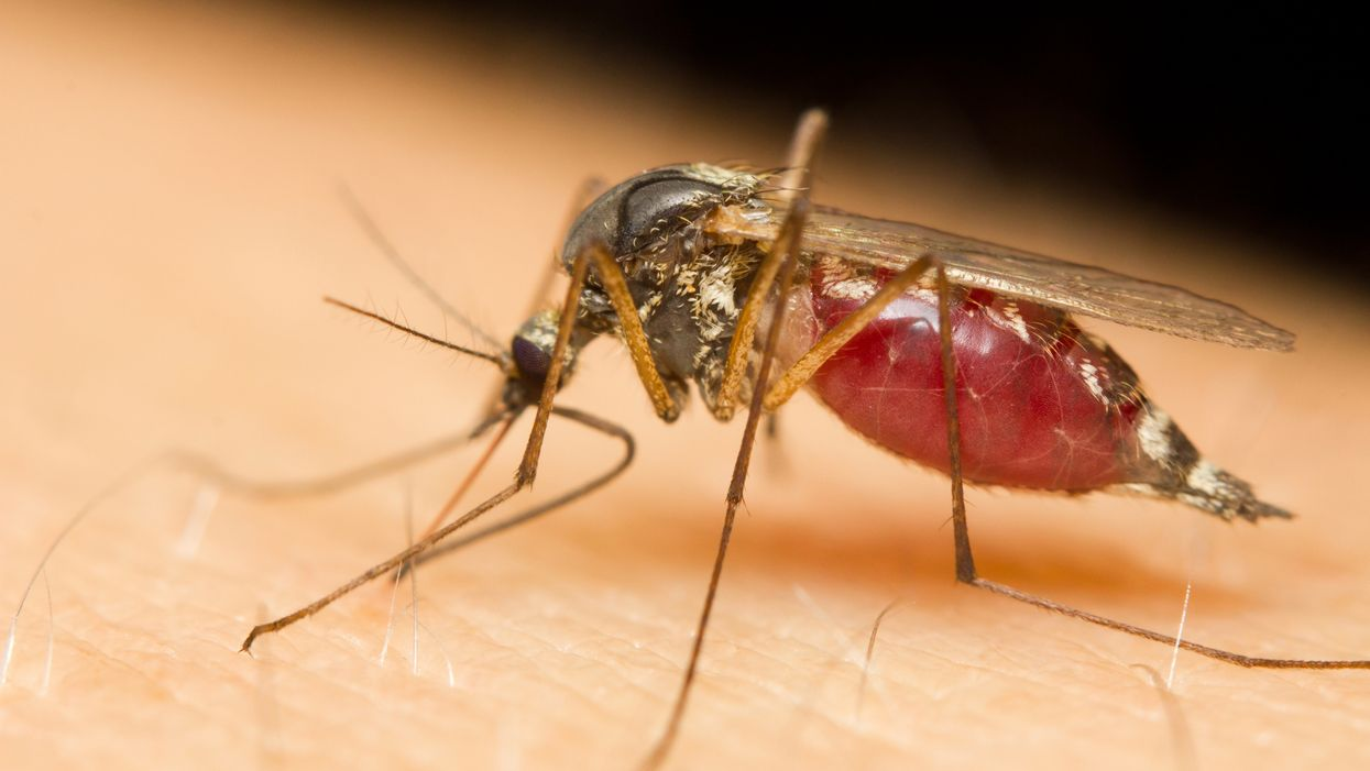 This Year's First Mosquito-Born Illness Was Just Confirmed In Miami And The Health Department Is Seriously Concerned