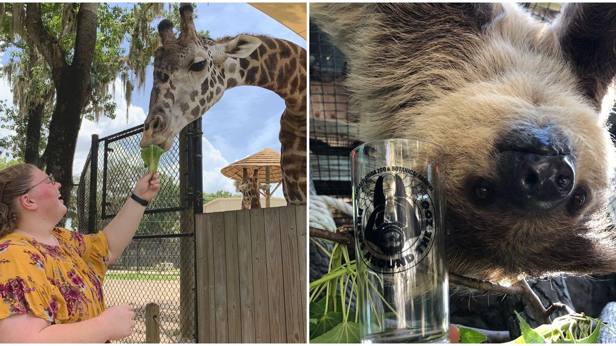 The Central Florida Zoo Is Hosting An Adults-Only Night With Booze This Week