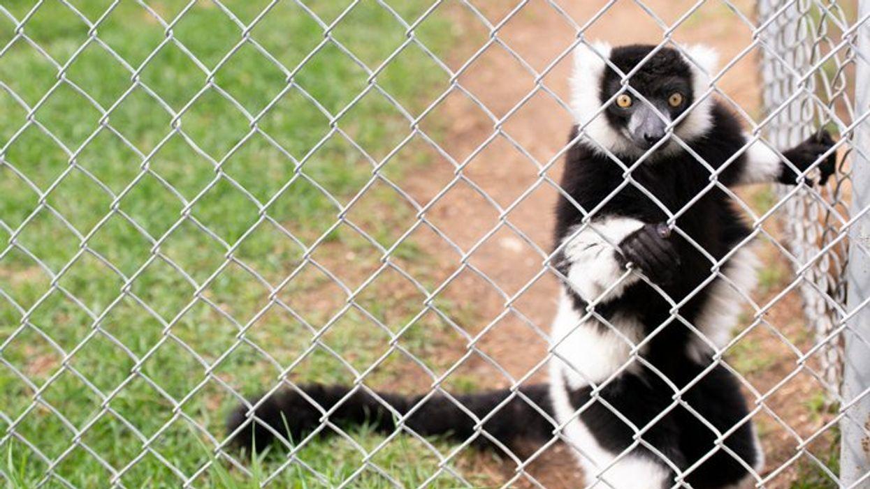 Tous les animaux maltraités au Zoo de St-Édouard ont finalement été évacués