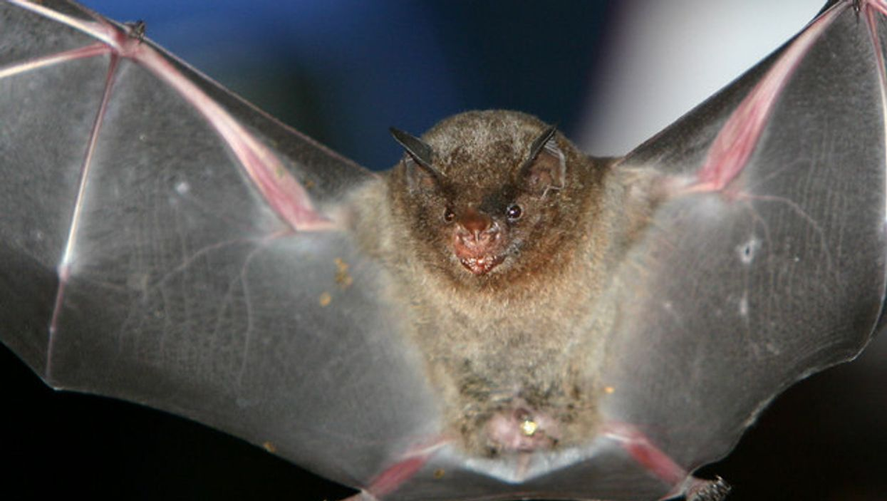 Bats Infected With Rabies Were Just Found In 2 More GTA Cities