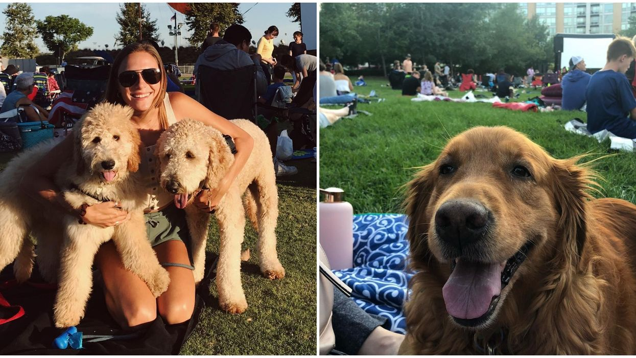 You Can Enjoy An Adorable Free Movie Date With Your Doggo In Ottawa This Month And It Looks So Pure