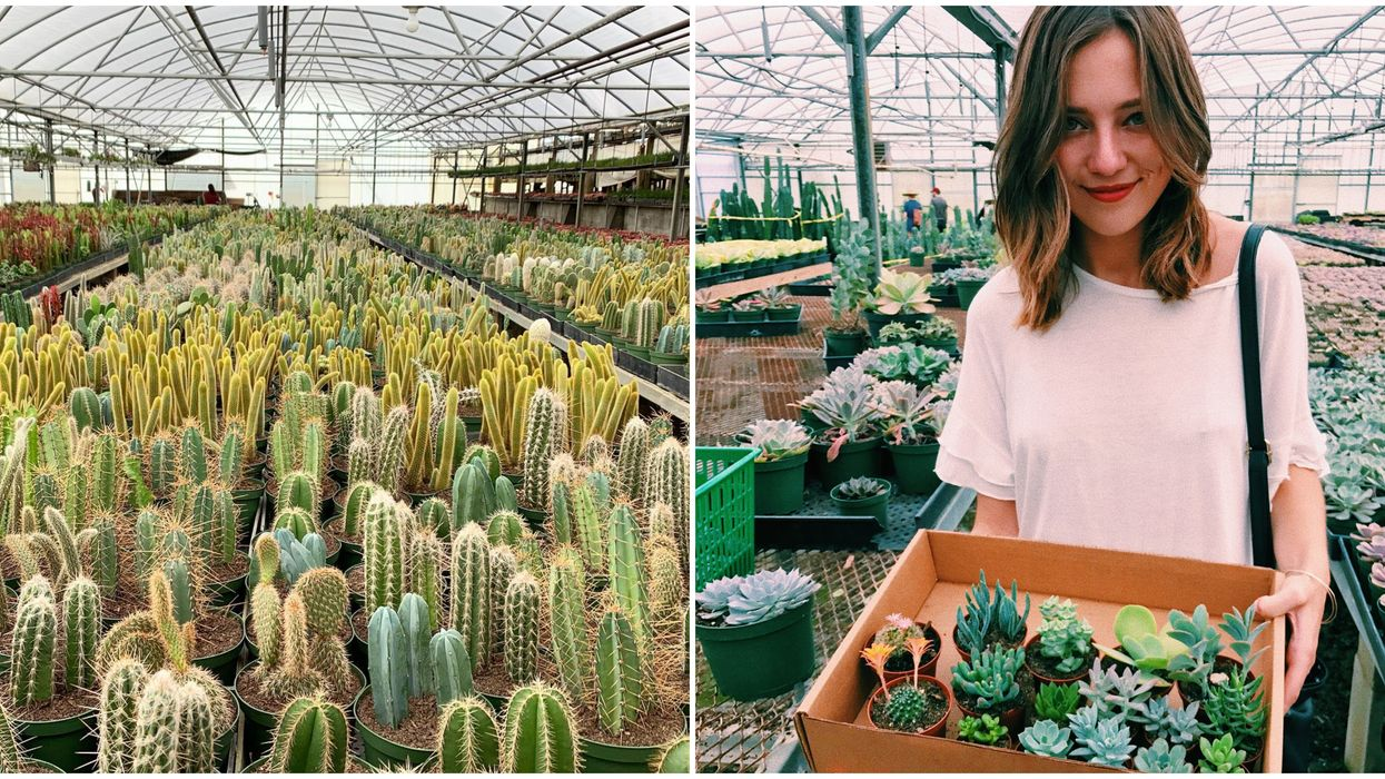 You Can Go On A Succulent Safari At This Hidden Cactus-Filled Greenhouse Near Orlando